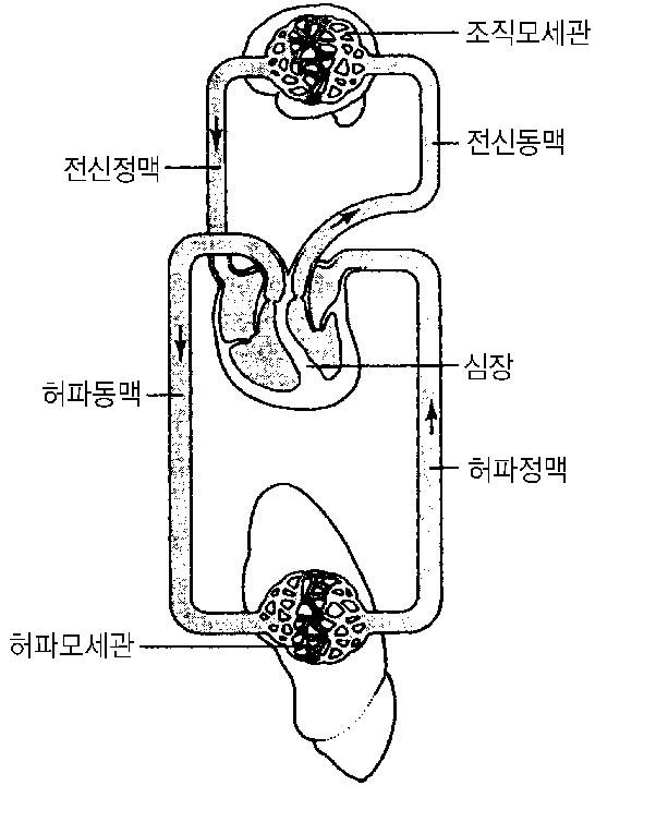 b varitone wiring diagram es